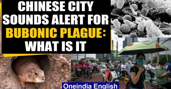 1474427183-bubonic-plague-china-reports-suspected-case-of-039-black-death-039-plague-sounds-alert.jpg